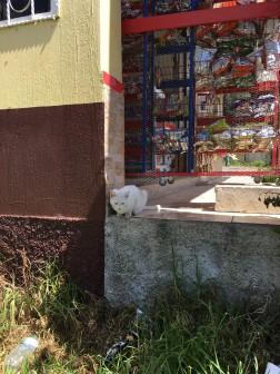 Kitty tienda