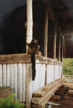 Lemur in Andapa
