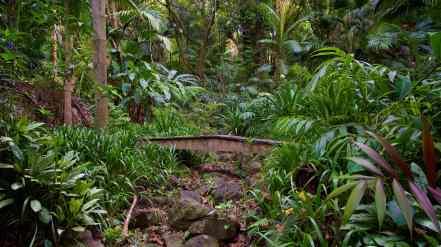 Merwin's Garden, Photograph by Larry Cameron