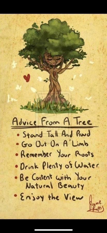 Advice from a tree.jpg