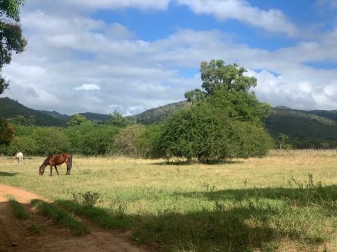 Rural Cuba by Janice Kwan