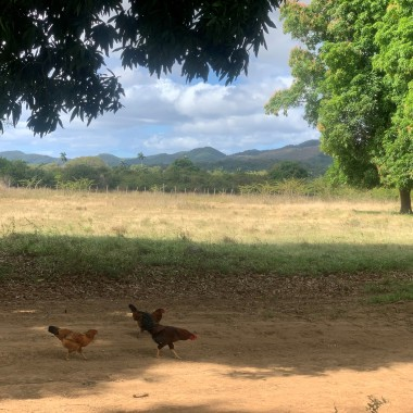 Rural Cuba Photo by Janice Kwan