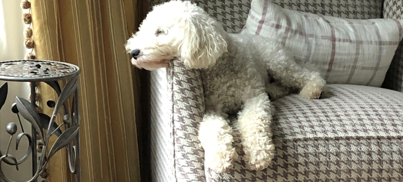 It's a Dog's Life: Lessons from My Dog V (From the DogII)